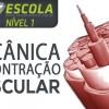 Curso Nível 1 - Mecânica da Contração Muscular